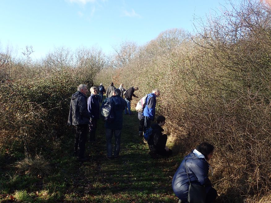 Brown Hairstreak egg-hunting group Hillingdon 9 Dec 18