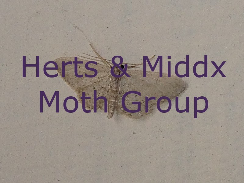 Herts & Middx Moth Group