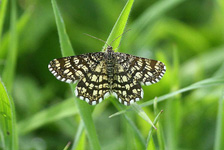 1894 Latticed Heath - Sandra Standbridge
