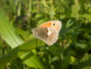 Small Heath 2009 - Elizabeth Debenham