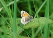 Small Heath 2009 - Robin Pearsont